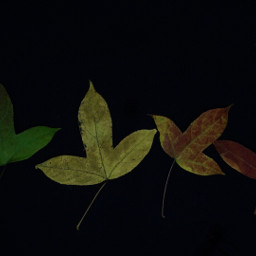 freetoedit vegetation plant photography autumn
