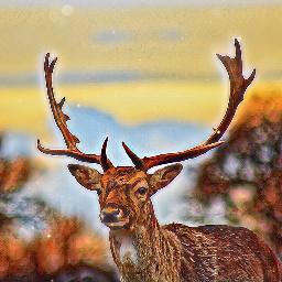 ircdelicatedeer delicatedeer freetoedit deer itriedokay