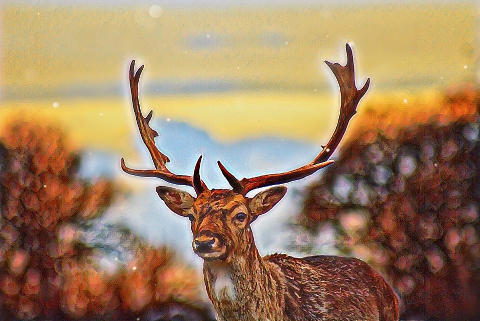 #freetoedit #deer #itriedokay #deerantlers