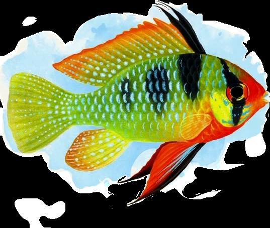 #peixe @joseaneg87