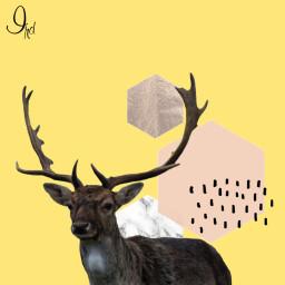 deer nature wildlife hunting deerhunting freetoedit
