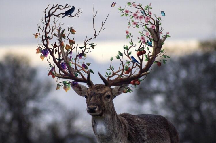 🥇🏆 Congrats to 1st place winner @algnatti for the Delicate Deer Challenge 🥇🏆 #deer #challengewinner #festive #christmas #freetoedit
