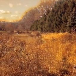 landscape foliage vegetation grass forest