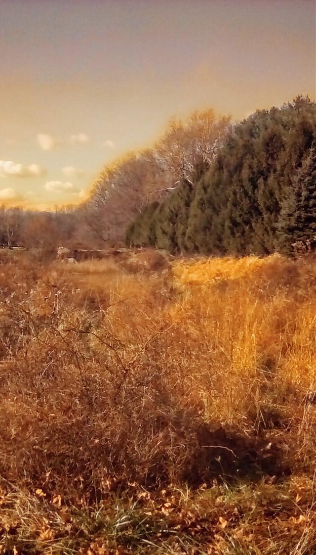 Woods view #Landscape #Foliage #Vegetation #Grass #Forest #TreesOfLife#thick#full#sunny#bright#Multicolored #PortraitOfColor #NaturePortrait #BeautyInNature #Vibrant #Illuminating #idyllic #Desktop #FullFrame #MyPhotography #iPhone8Plus #CameraFilters #EditWithQuickshot