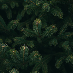green christmas christmastree background backgrounds freetoedit