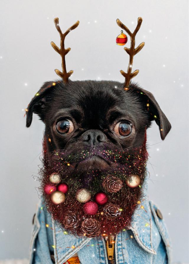 #dog #christmas #happychristmas #funnydog #christmasdog #freetoedit #beard #girlybirly
