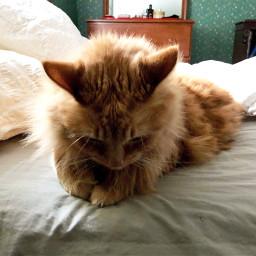 freetoedit kitty catsofpicsart cat petsandanimals pcpetsofpa