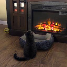 freetoedit kitten watchingtv