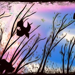 raven fallsky treesilhouette colorful freetoedit