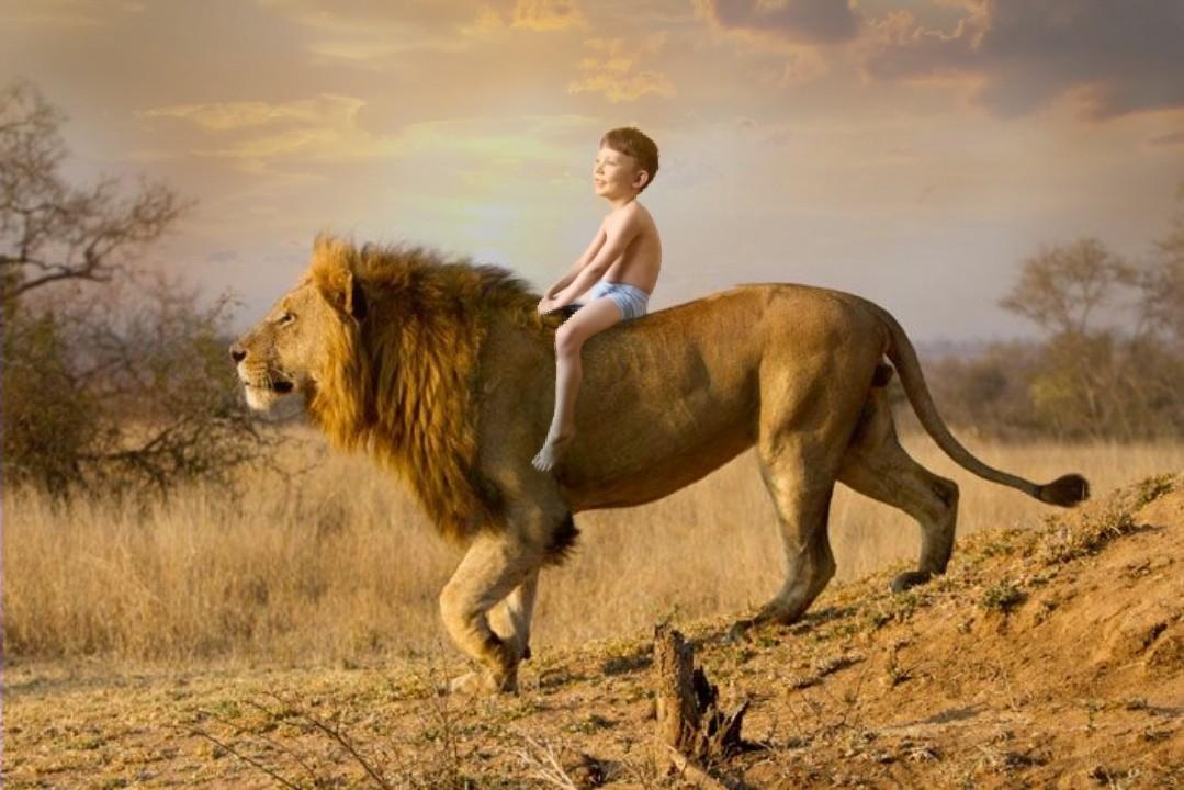 картинка шагающих львов видит лошадь