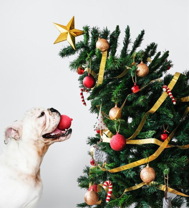Dive into the sea of imagination Unsplash (Public Domain) #dog #dogs #christmas #christmastree #freetoedit