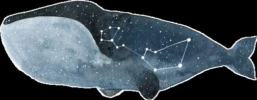 #constellation #constellations #whale