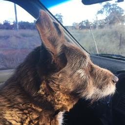 pcanimaladventures animaladventures mydog adorable
