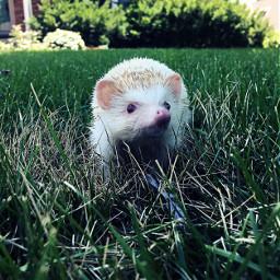pcanimaladventures animaladventures hedgehog jobsearch