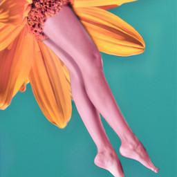 freetoedit legs edit flower graphicart