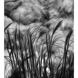 oilpainting bnw blackandwhite grass freetoedit