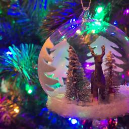 myphotography pcchristmasdecor christmasdecor pcchristmastrees christmastrees