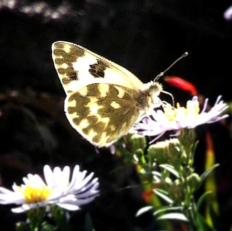 #nature #naturalbeauty #flower #dark #butterfly