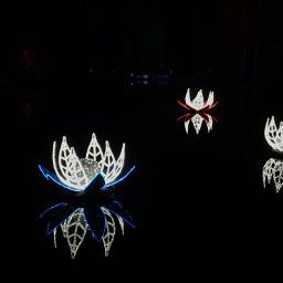 christmaslights searose watermirror night