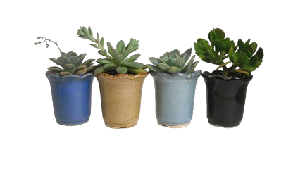 plants tumblr aesthetic png pngsticker freetoedit