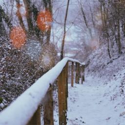 christmas winterwonderland snow nature photography freetoedit