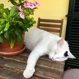 pclifestylephoto lifestylephoto cat asleep stillness freetoedit