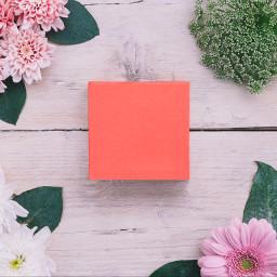 pantone background backgrounds pastel freetoedit