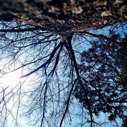 pcupsidedown upsidedown photographychallenge tree