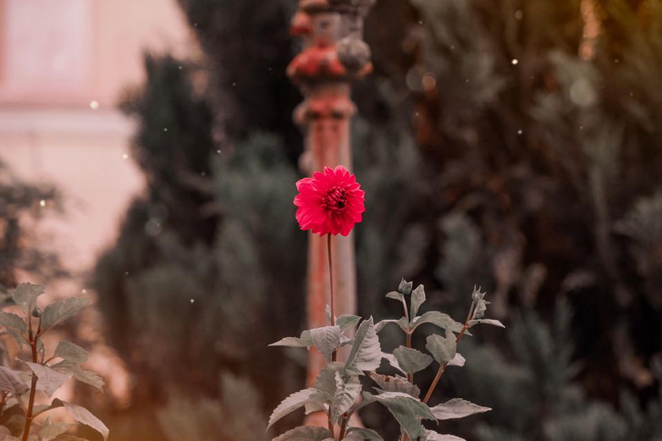 #freetoedit #flowershot #flowersfollower #flowerstyles_gf #flowershots #flowerslover