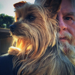 saturdayvibes yorkielove selfie sunset californiadreamin