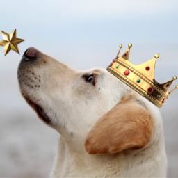 dog king cute star interesting freetoedit