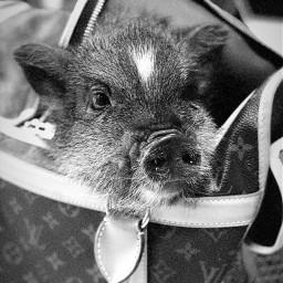arianagrande piggysmallz cute