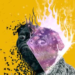 freetoedit doggo dispersioneffect brusheffect remixed