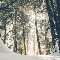 winter snow nature background backgrounds freetoedit