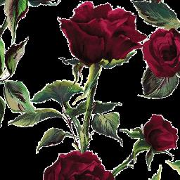roses rosesarered rosesticker