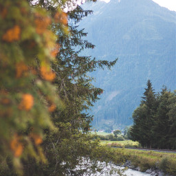 forest nature nationalpark austria hohetauern