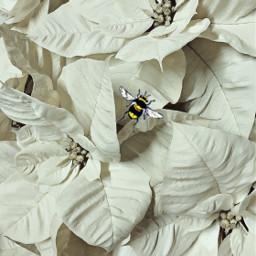 freetoedit flower bee