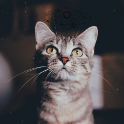 irchappymeowyear happymeowyear freetoedit cat galaxy
