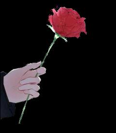 rose gül anime çizim drawing freetoedit