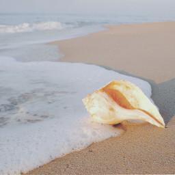 pafamily friendship dedication beachscenery horizon freetoedit