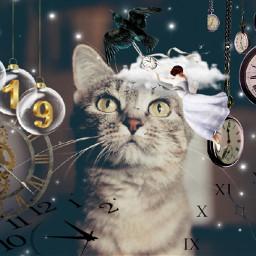 myedit cute cat clocks watches freetoedit