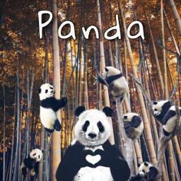 freetoedit fantasy panda