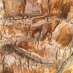 freetoedit texture palm palmtree bark