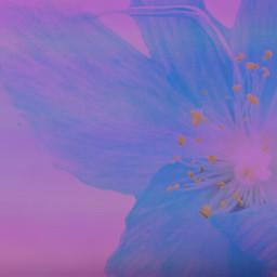 freetoedit background purplebackground flowerbackground flower