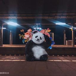 freetoedit panda flower light night