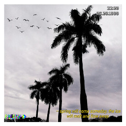 srcbirds birds freetoedit