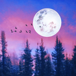 freetoedit nature night art