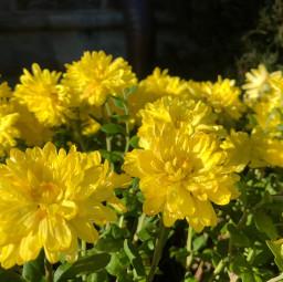 freetoedit rain flowers yellow wakeupworld