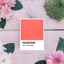 ircpantonecolor pantonecolor freetoedit pantone coral