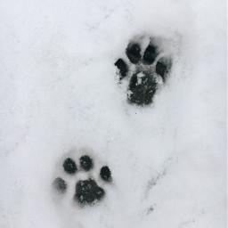 freetoedit cat paw snow cold